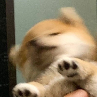 Malory A.