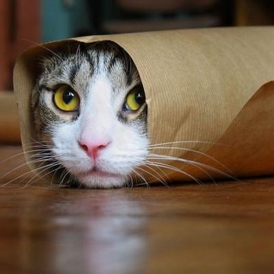 Cat E.