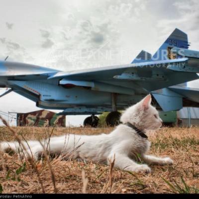 Gato Goloso